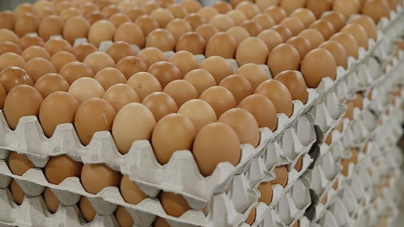 Poslanci odmítají zákaz klecových vajec - Drůbežána Holešov